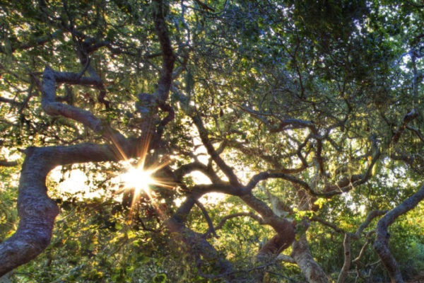 Los Osos Oaks State Park Natural Reserve